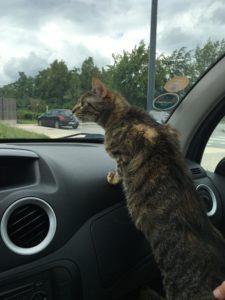 expatriation avec un chat